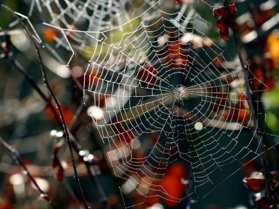 frosty spider web