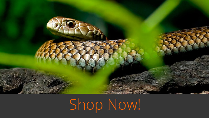Wildlife Bytes View Wildlife Photography Online Shop