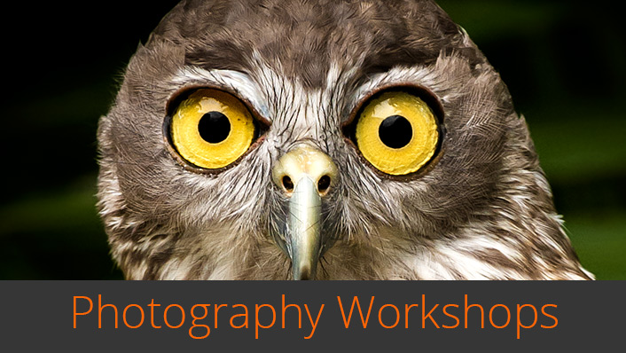 Wildlife Bytes Wildlife Photography Workshops