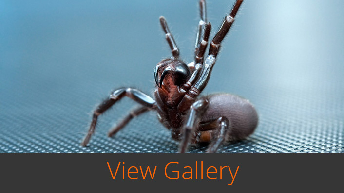 Wildlife Bytes View Wildlife Photography Gallery